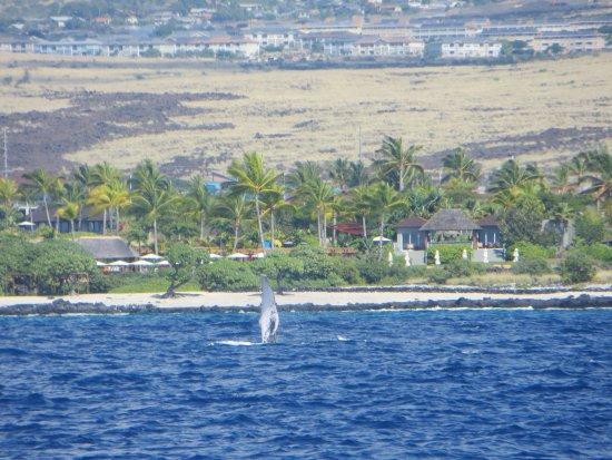 Holualoa, Hawaje: fin clapping