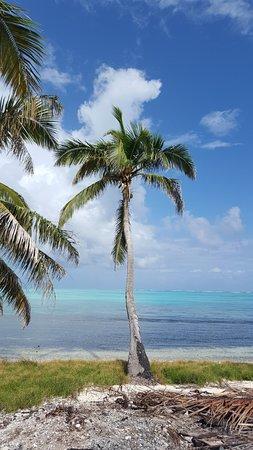 Caye Caulker, Belize: palm-tastic