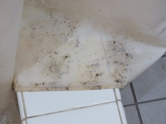 Le Consulat An Ascend Hotel Collection Member Black Mold On Shower Curtain