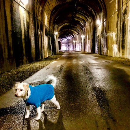 Montour Trail: We visited national tunnel and Enlow tunnel. National is the wet tunnel and the absolute best. B