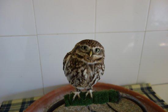 Siggiewi, Malta: Tamara, a little owl. She is the sweetest.