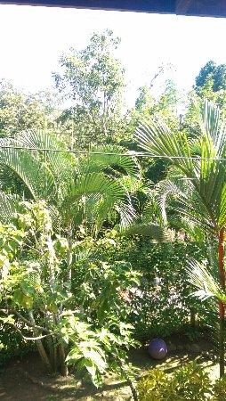 Coconut Love Beach House: giardino