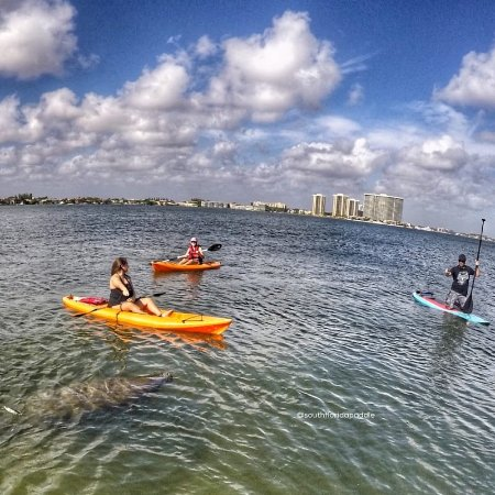fd76461aa55c South Florida Paddle: MacArthur State Park Paddle Board Eco Tour with a  manatee