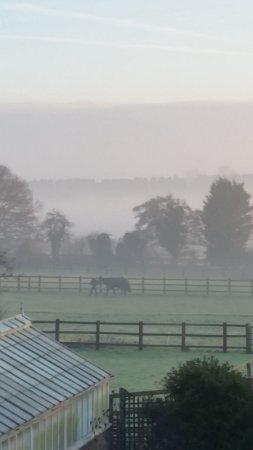 Norfolk House Bed and Breakfast: View from my window on my last morning. Simply beautiful