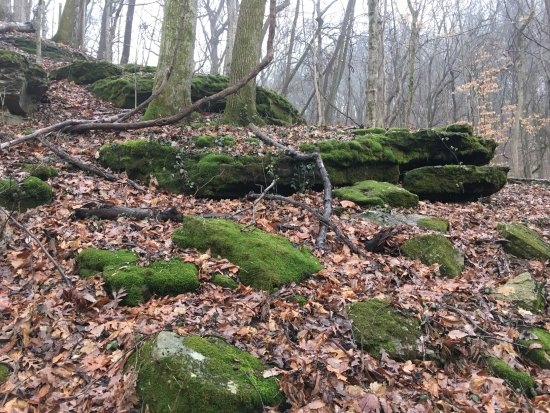 Edwin and Percy Warner Parks: Wonder why they call it Mossy Ridge??