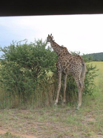 Mabula Private Game Reserve-billede