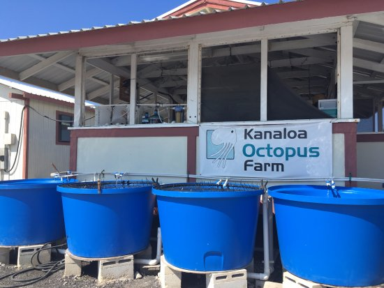 Friends of NELHA: Kanaloa Octopus Farm