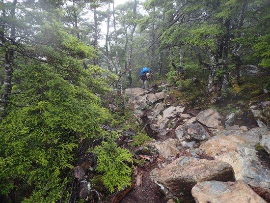 Tasman, Nueva Zelanda: Portion of the trail below the bush line was still steep and rocky