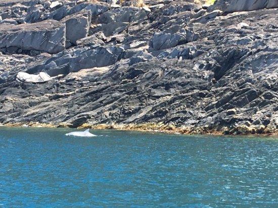 Penneshaw, Australien: photo2.jpg