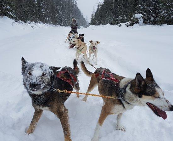 Revelstoke Dogsled Adventures: IMG_20170206_125420_061_large.jpg