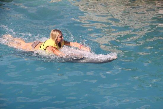 Dolphinaris Cozumel: belly swim