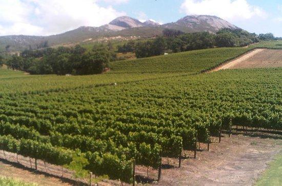 Cape Winelandsケープタウンガイド付きツアー