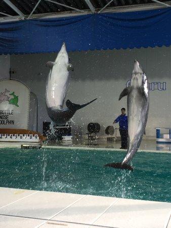 アザラシ達 - Picture of Otaru Aquarium, Otaru - TripAdvisor