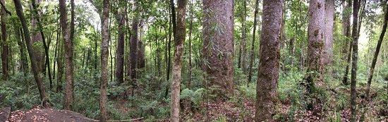 Waipoua Forest, Νέα Ζηλανδία: photo5.jpg