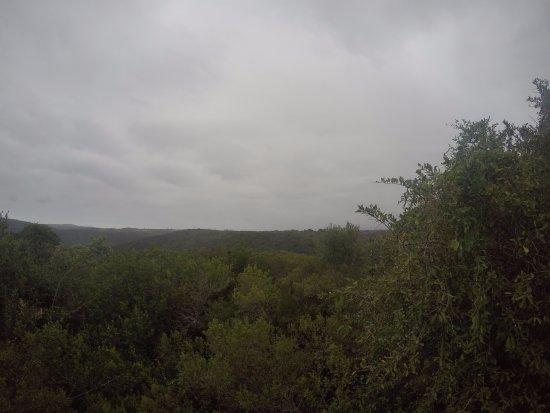 Teniqua Treetops Photo