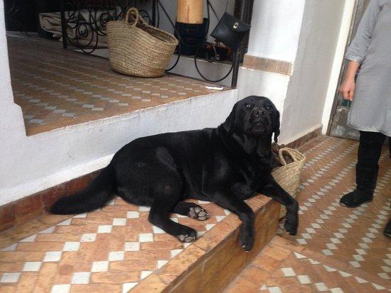رياض لاروزا: わりとおおきい犬です。