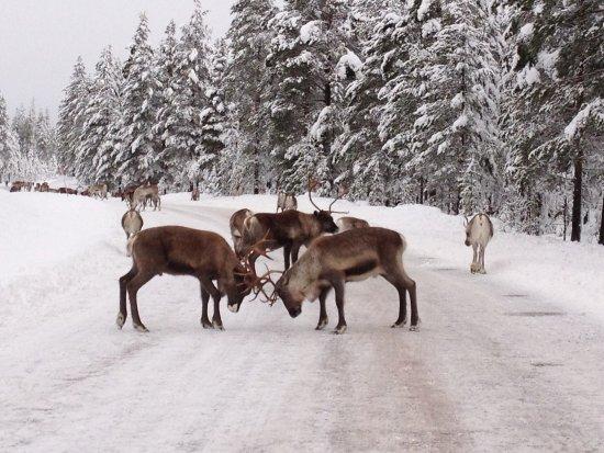 Sarna, Svezia: Traffic stop