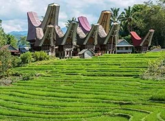 Toraja and New cafe aras rantepao