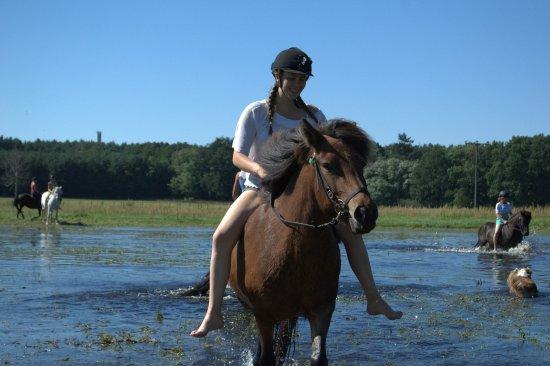 Abkühlung abkühlung im sommer für pferd und reiter bild erlebnis