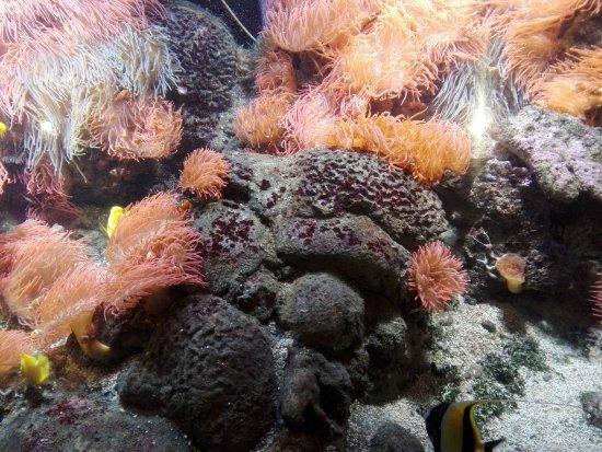 Pesci tropicali picture of acquario di genova genoa for Pesci tropicali acquario
