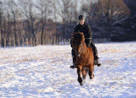 Gross Briesen, Niemcy: Reiten macht auch im Winter Spaß! Individuelle Betreuung und kleine Gruppen inklusive!