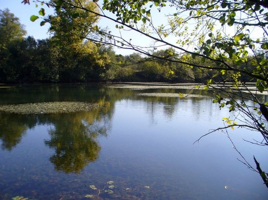 Saint-Denis-de-Pile, ฝรั่งเศส: étang en bordure propriété