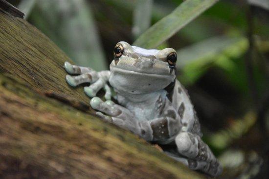 Trinity, UK: Frog