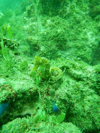 Seahorse Diving Tamarindo: WHO CAN SEE HIM ??