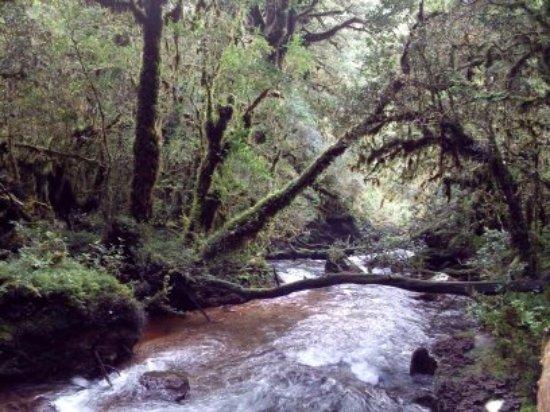 Bosque Encantado: Bosque