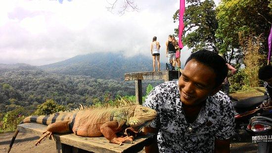 Bali Lovina Beach Cottages: P_20160924_095834_large.jpg