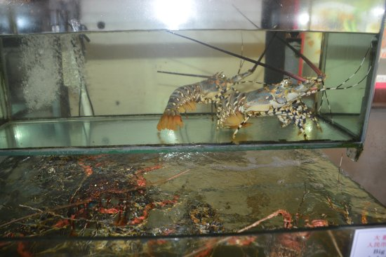 Kuta Station Hotel: Live Lobsters selling in restaurant