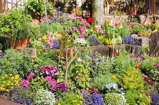 Sebring, FL: Flower Gardens