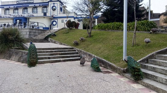 Parque Reina Sofía: Pavos en El Parque de Ferrol