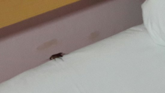 Far East International Hotel Beijing: Cucaracha sobre la cama