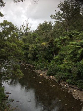 Waipoua Forest, Νέα Ζηλανδία: photo0.jpg