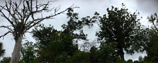 Waipoua Forest, Νέα Ζηλανδία: photo2.jpg