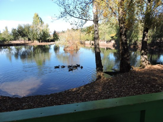 Camino, Kaliforniya: Lake with ducks