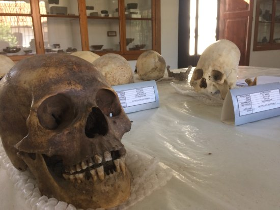 Museo Charcas (University Museum Colonial & Anthropological): Skulls from inside Museo Charcas