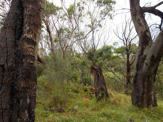 Frankston, Austrália: Thick bush