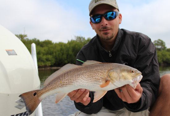 Boca Grande, FL: Redfish that I tagged & released