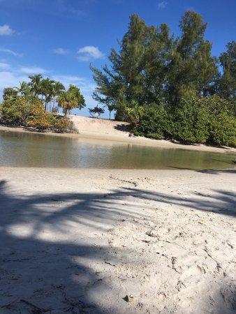Jupiter, Flórida: Creatures we found