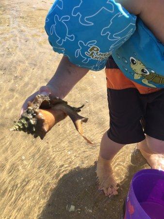 Jupiter, FL: Creatures we found