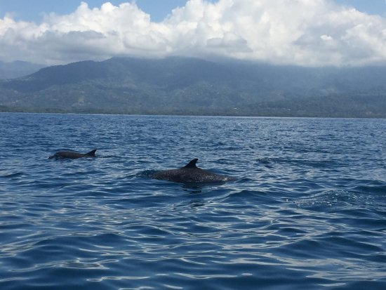 Osa Peninsula, Kosta Rika: photo2.jpg