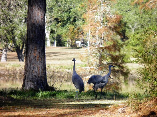 Gautier, MS: A mated pair with their baby!