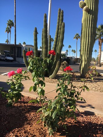 Mesa Spirit RV Resort: Love the flowers and the cactus