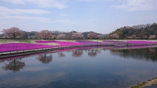 東京ドイツ村, 芝桜のシーズンはお薦めです。
