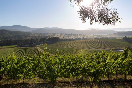 De Bortoli Winery & Restaurant: Vines at De Bortoli Estate
