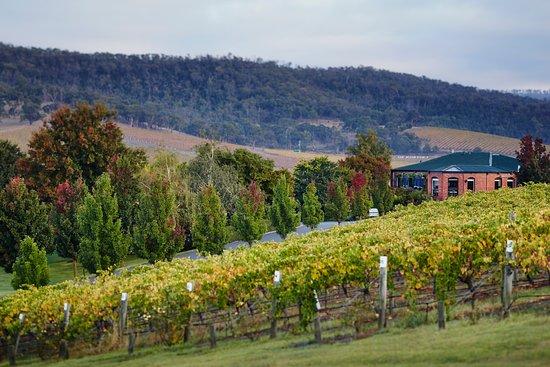 Dixons Creek, Avustralya: Locale restaurant in amongst the autumn colours