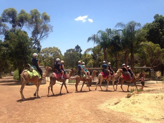 Kalamunda, Austrália: This group is arriving back after a relaxing 1 hour ride, contact us to book in for your ride to
