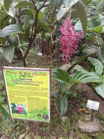 Makiling Botanic Gardens: MBG-001